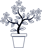 Pflanze über 0,50 m (nur Umzug)